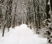 cropped-winter-pictures-2012-0031.jpg