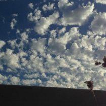 cropped-fainbow-009.jpg